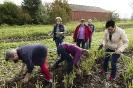 Gemüseretter 06